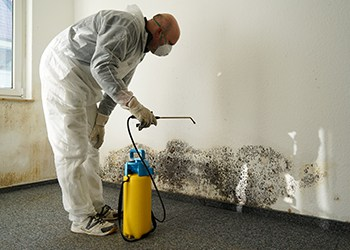 Can Mold Grow in Carpet?